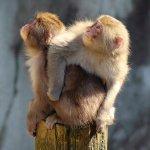 中国切手「赤猿」買取